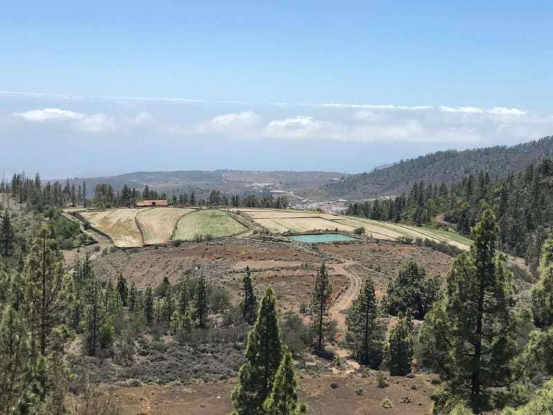El Cabildo prohíbe hacer fuego en los montes debido al riesgo de incendio forestal